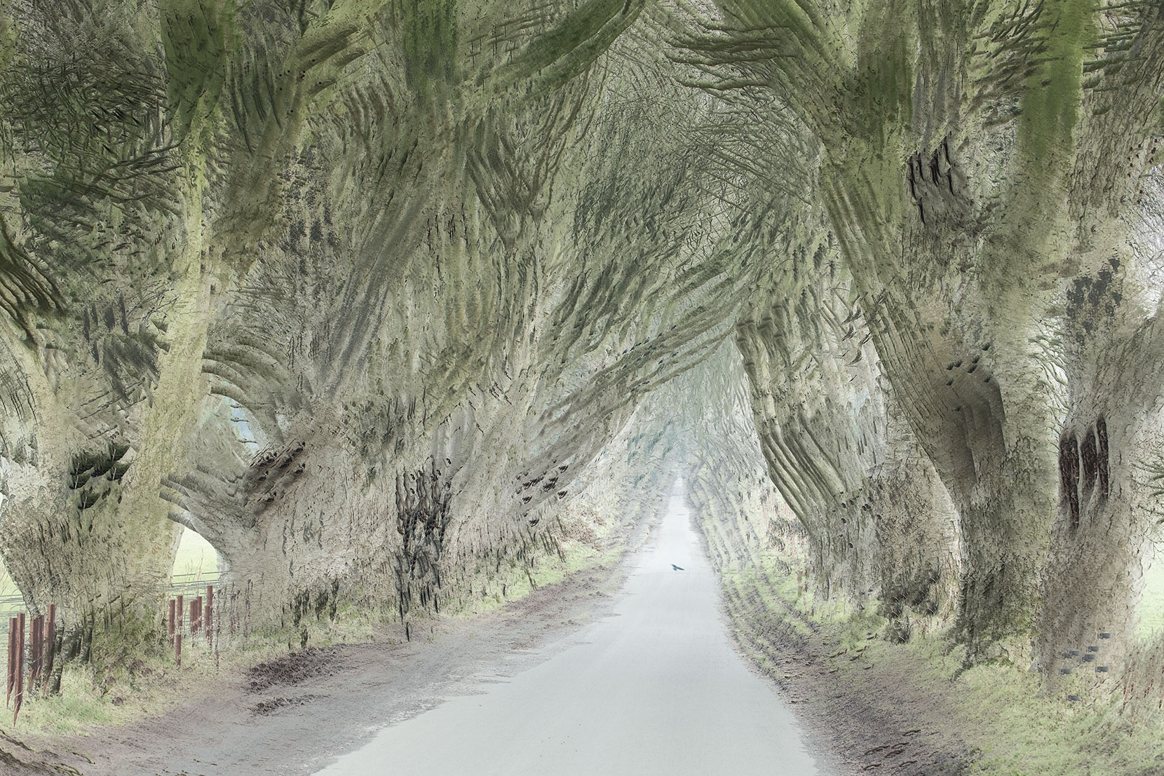Dark Hedges in Northern Ireland, an alternative take using 9 multiple exposures