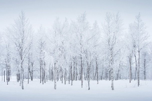 David Clapp Canon 1Dx Field Test - in the snow in Norway
