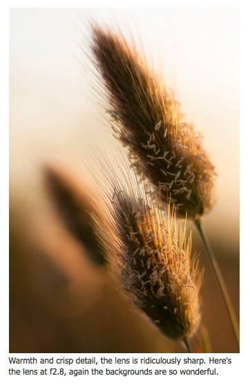 Soft grasses, shot with the Sigma 85mm f1.4