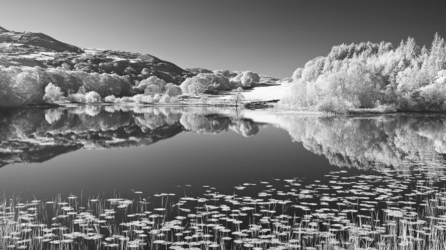 Final Infrared image converted to black and white using the black and white filter